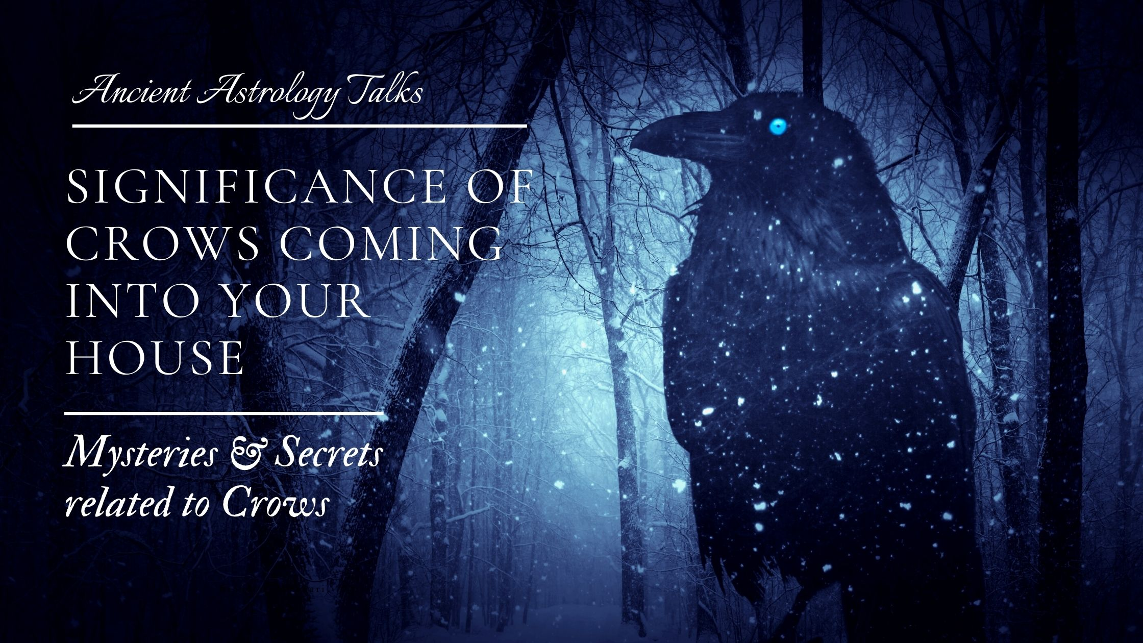 Significance of Crows Coming Into Your House